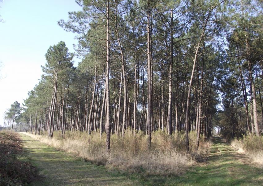 Massif Forestier à proximité de Tours, à vocation cynégétique
