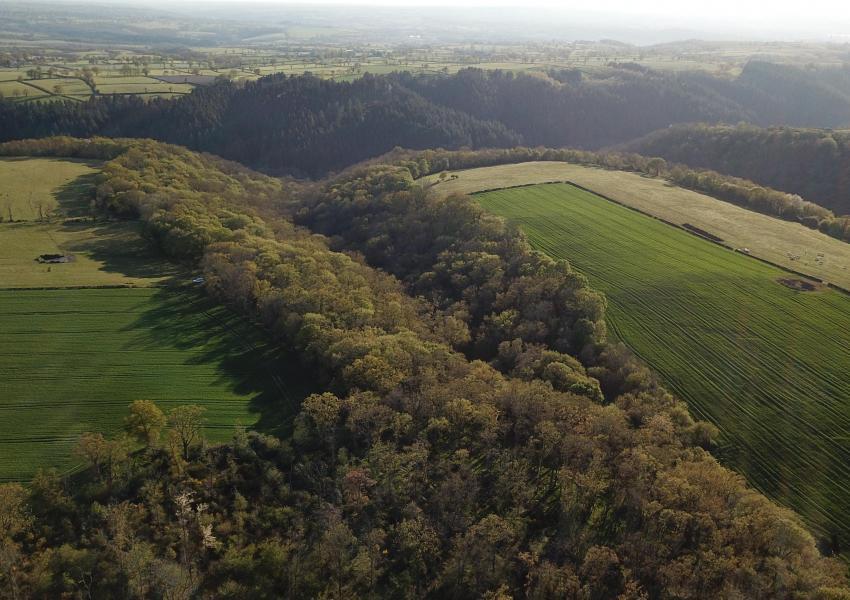 Propriété forestière dans le département de l'Allier