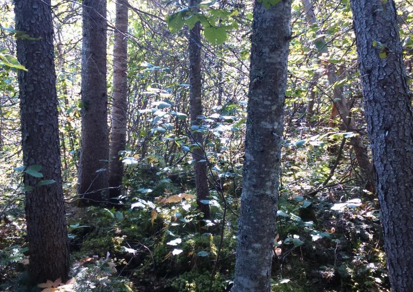 Propriété forestière près de la ville de Québec