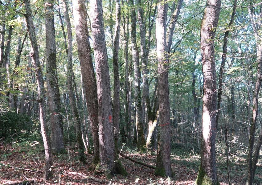 Forest for sale in Gers