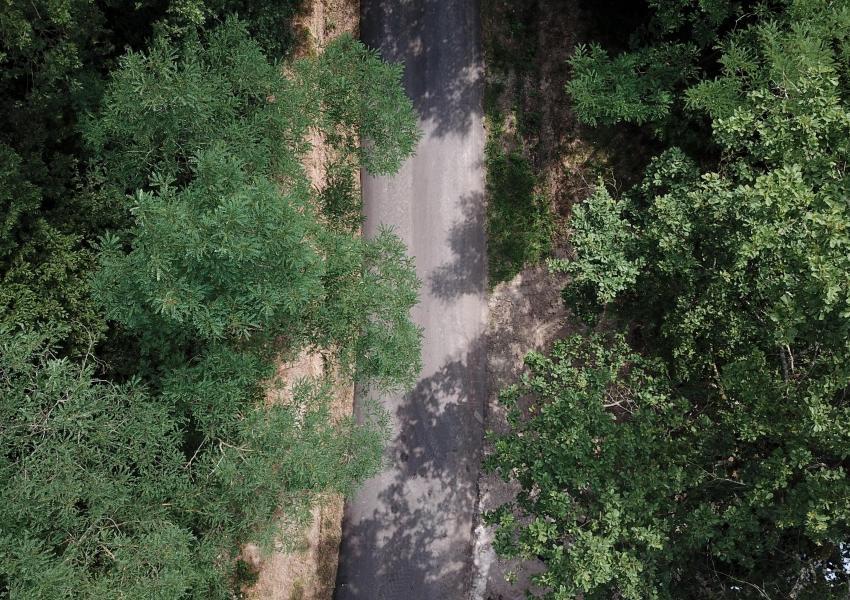 Chênaie de 23 ha au cœur du massif central