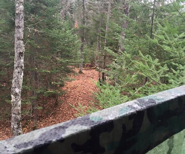 'Forêt de la Chasse au Chevreuil' forest estate close to the town of Duhamel–western Quebec.