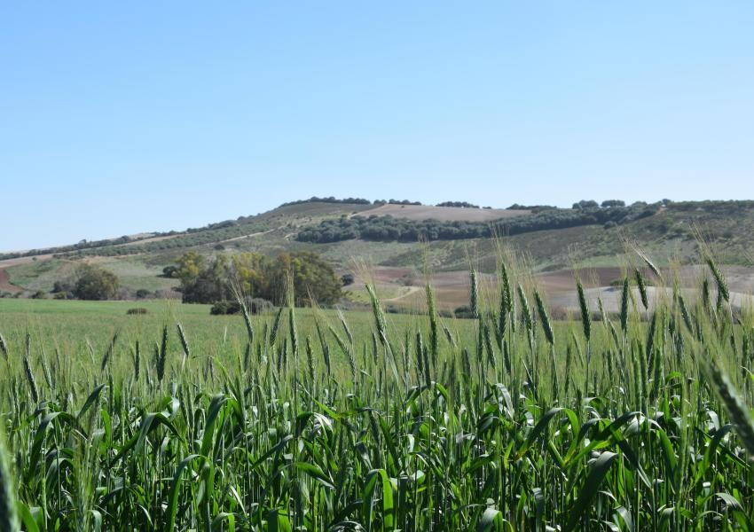 Hunting and farming estate in Andalusia (Spain)
