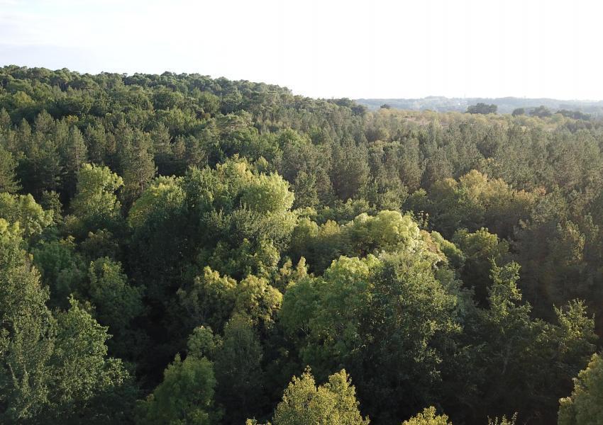 Domaine Forestier en Dordogne limite Gironde