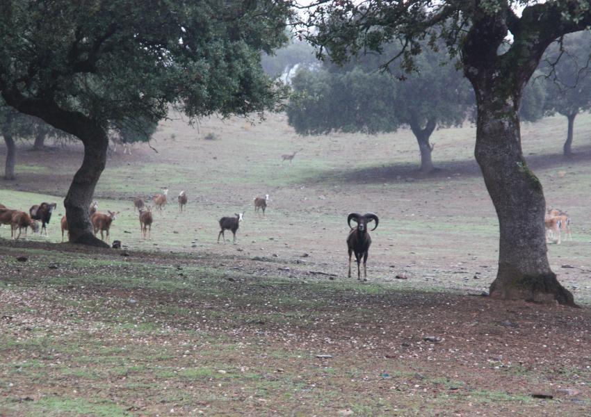 Propriedade florestal e de caça com cerca de 550 hectares