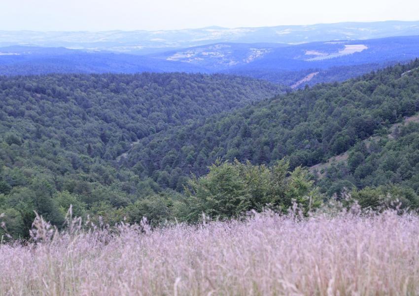 Location Domaine de Chasse et Bâti en Lozère