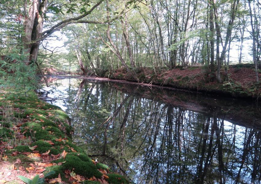 Propiedad rural en Loir y Cher
