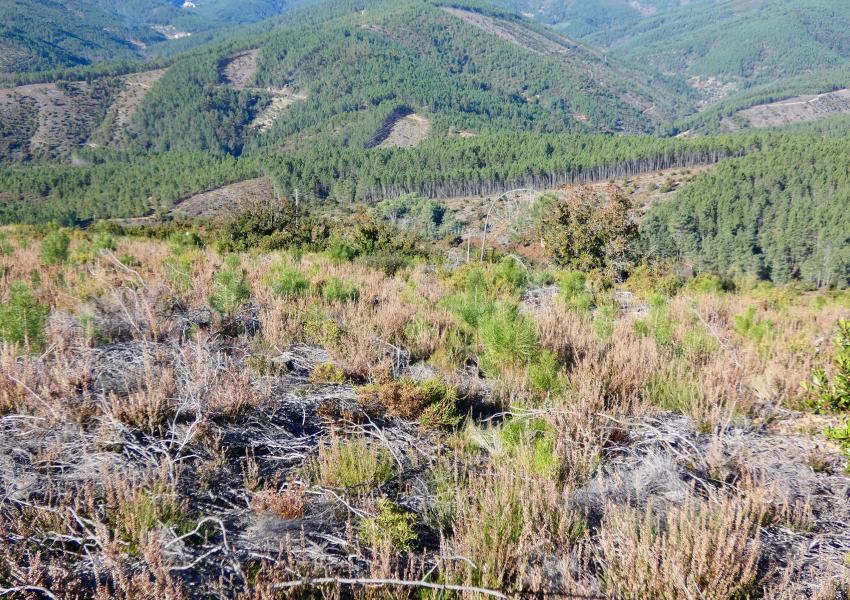 Propriété forestière a Covilhã, au Portugal