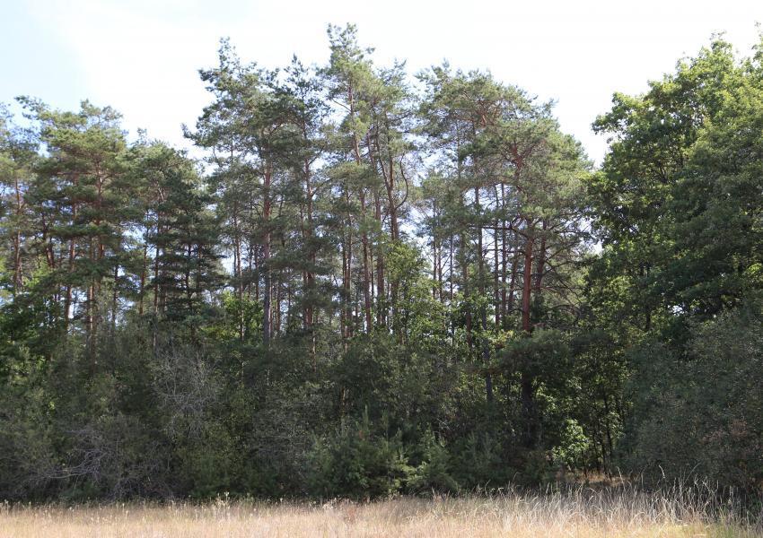 Domaine forestier et cynégétique avec maison d'habitation en Sologne.