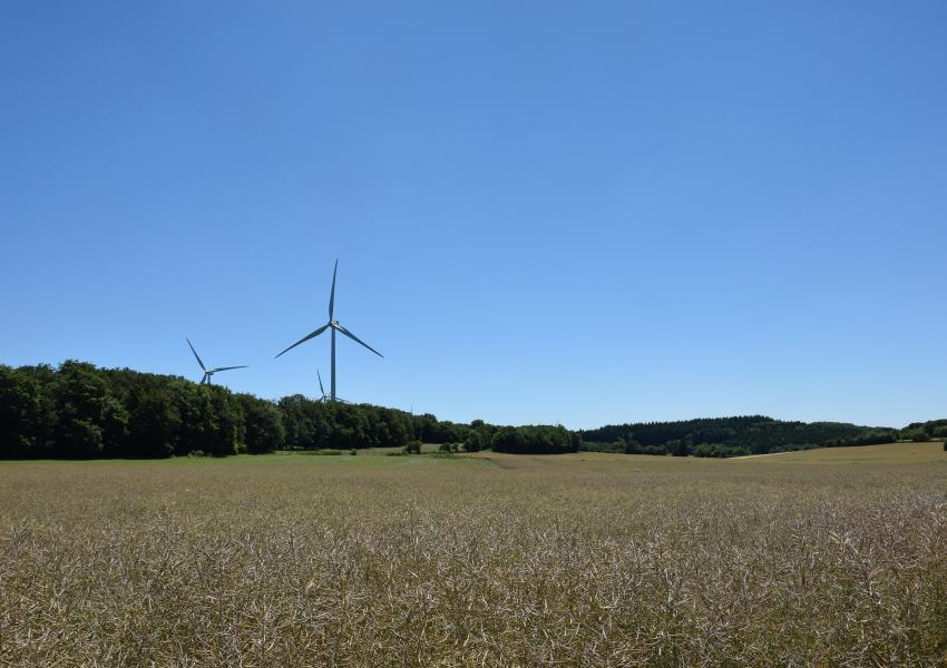 Forêt de production en Bourgogne-Franche-Comté