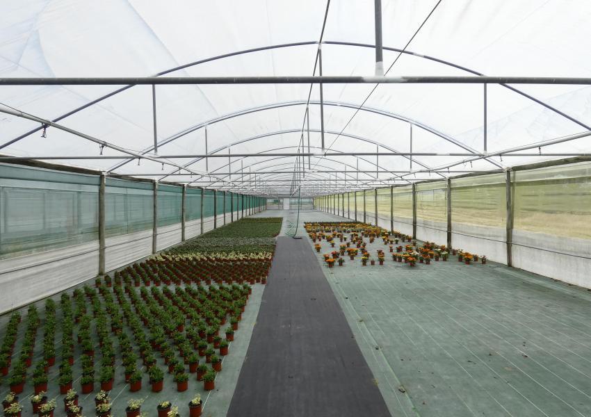 Propriété agricole de 15ha avec 19.000 m² de serres, Pegões, Setúbal, Portugal
