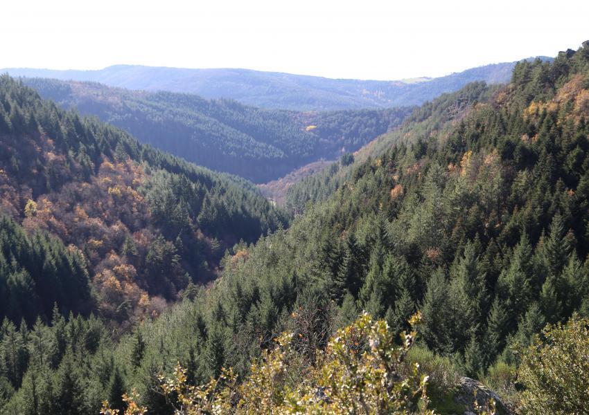 Forêt de production et chasse privée
