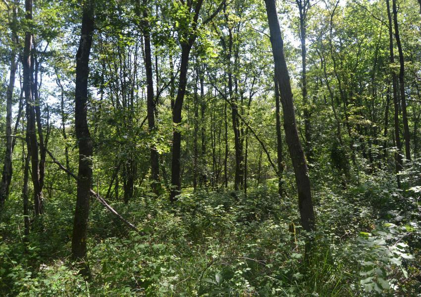 Forest estate in the Hautes Pyrénées