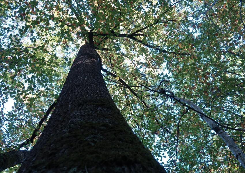 Forêt à vendre dans le Gers
