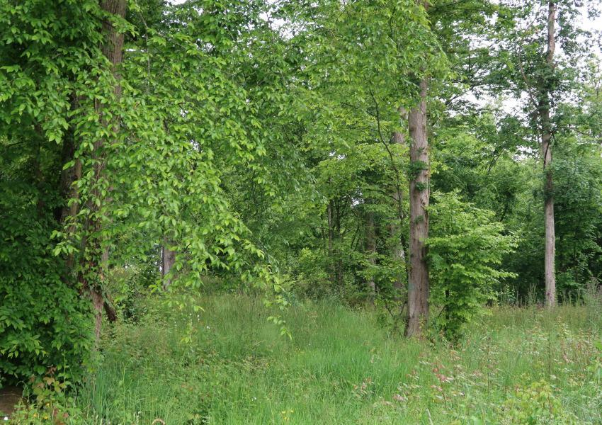 Parcelle forestière dans le Gers