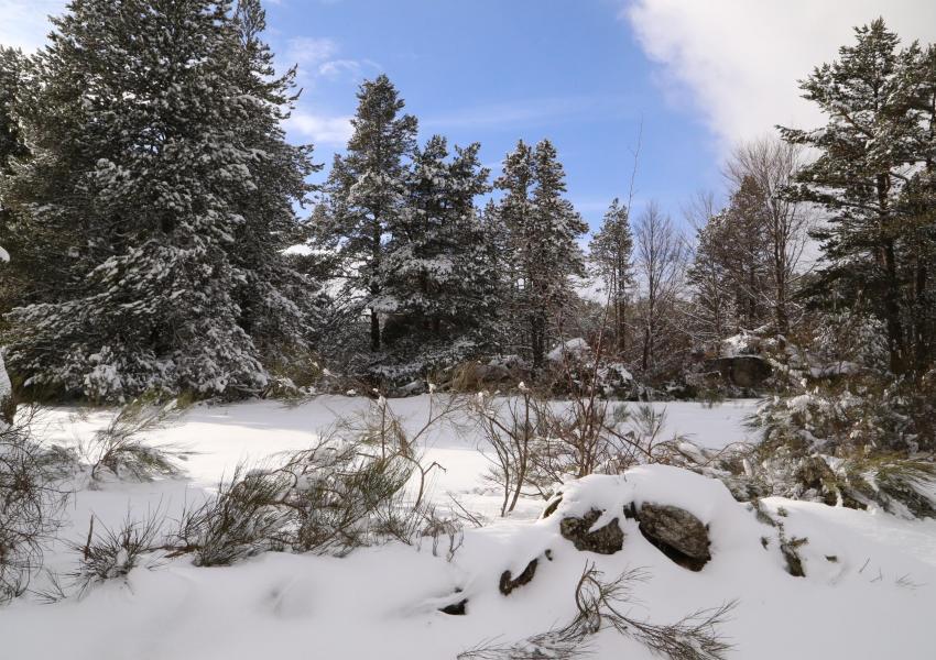 Divers lots de parcelles forestières dans les Pyrénées-Orientales