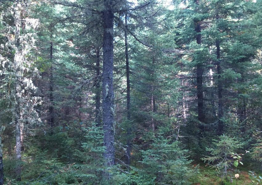 Propriété forestière à La Malbaie (Québec)