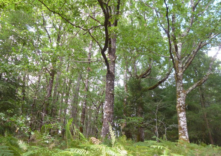 Ensemble forestier en Dordogne