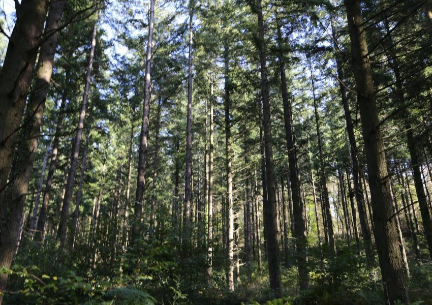 Massif forestier dans l'Hérault