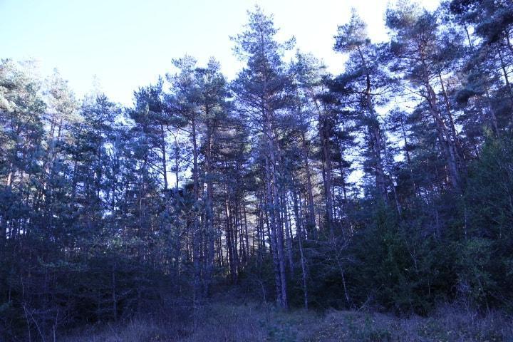 Domaine de chasse en Lozère
