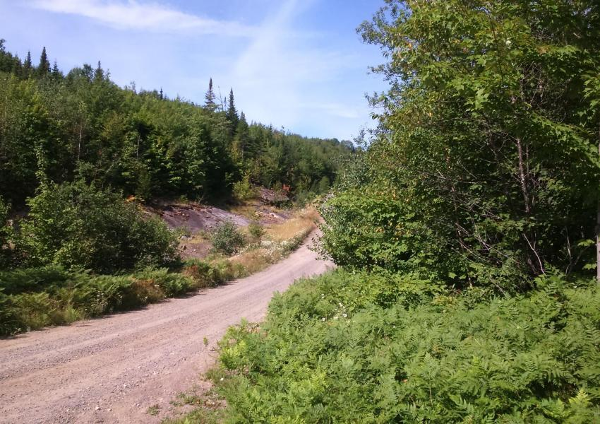 Forest massif near Quebec City