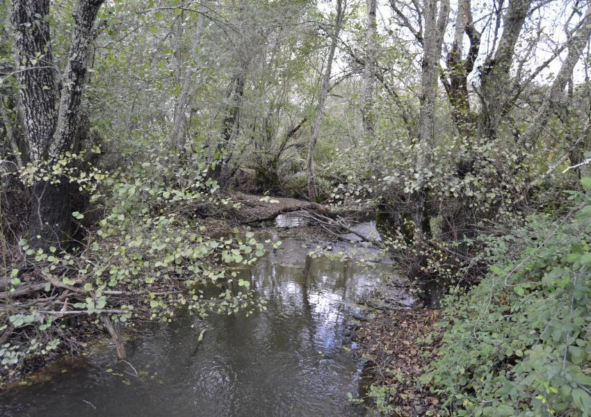 Propriété agro-forestière de 90 ha a Odemira, Alentejo