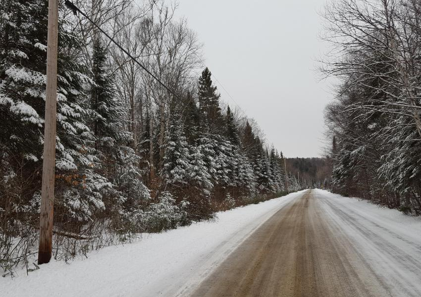 'Forêt de la Chasse au Chevreuil' forest estate close to the town of Duhamel – western Quebec.