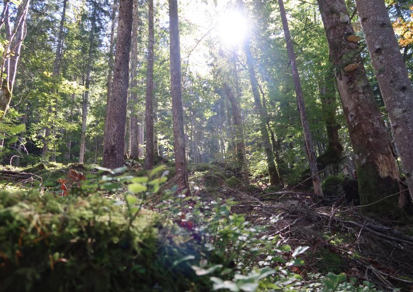 Forêt de Production proche de la Frontière Suisse