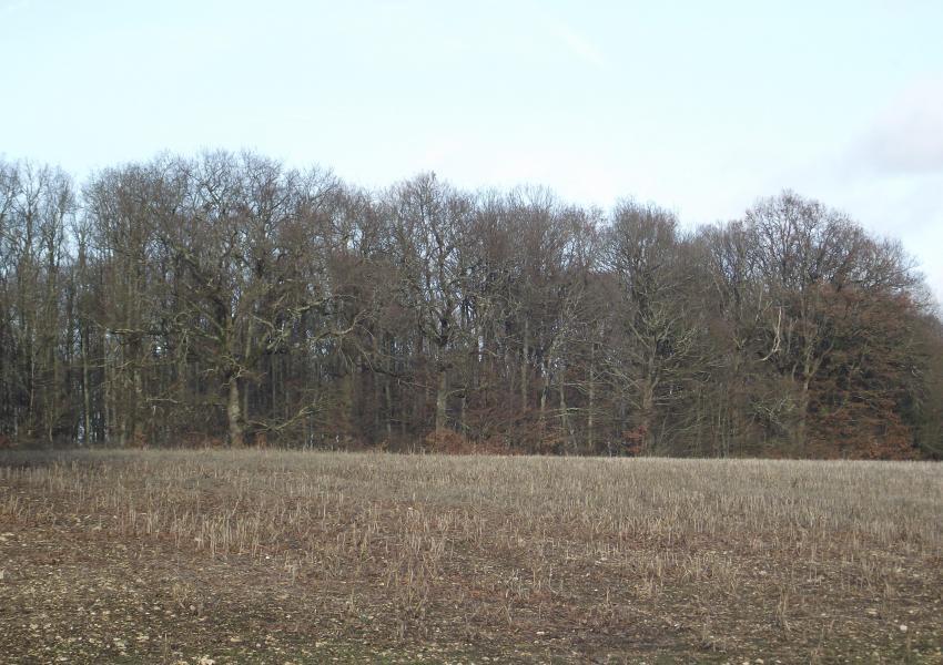 Domaine de charme à vocation agricole, forestière et cynégétique