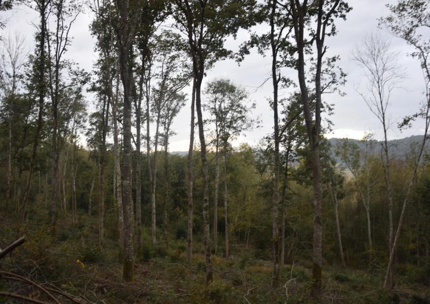 Forêt Mixte dans le Sud Ouest