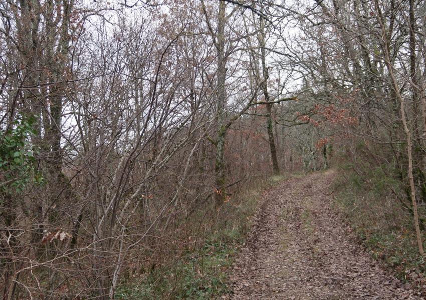 Propriété Forestière de Loisirs dans le Lot