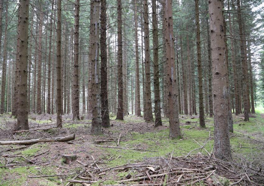 Saint-Etienne Forêt de production 114 ha