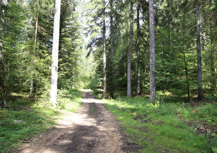 Forêt de production dans le département du Jura