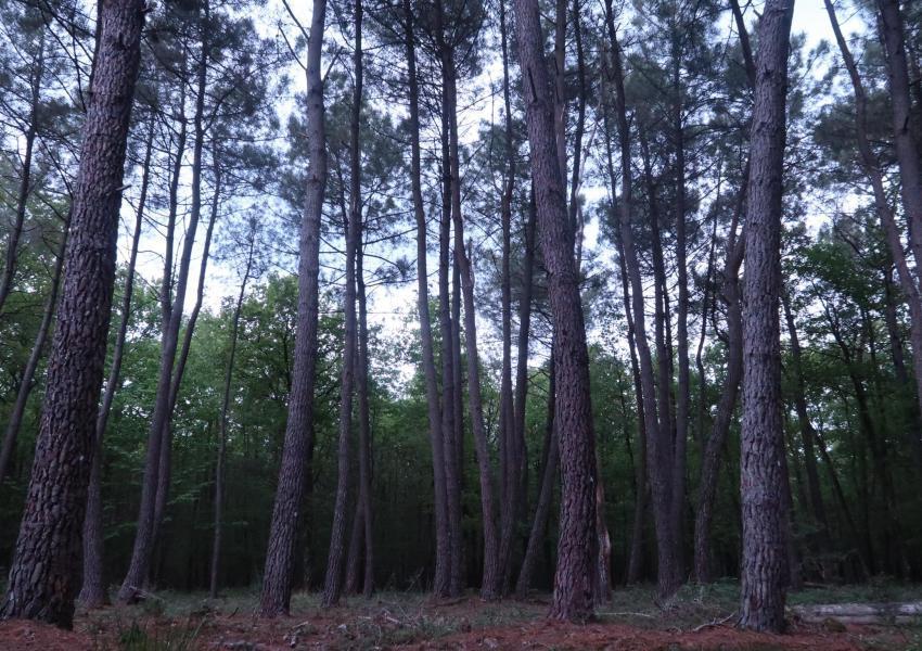 Propriété composée d'une forêt et de terres cultivées en Indre et Loire