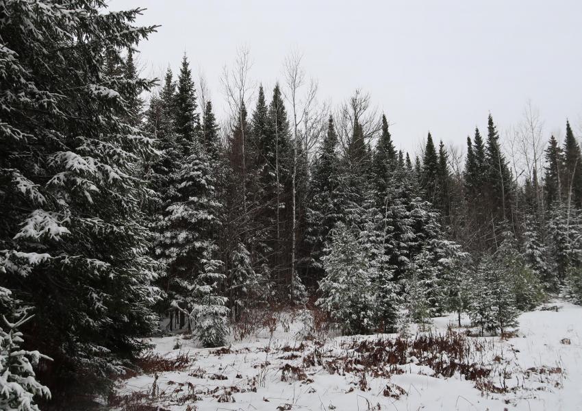 """Propriété forestière, """"Forêt de la Chasse au Chevreuil"""" proche de la ville de Duhamel - Ouest Québec"""