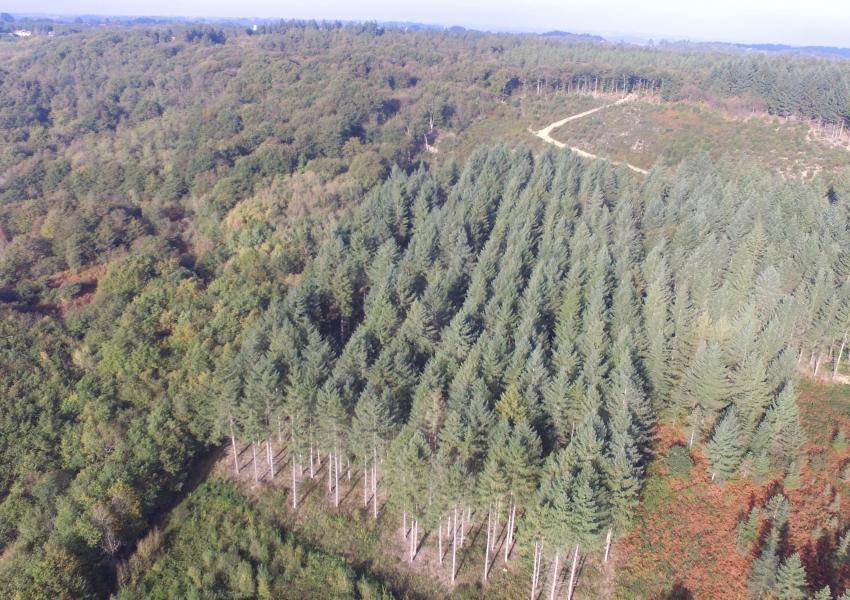 Propriété forestière dans le Sud Ouest