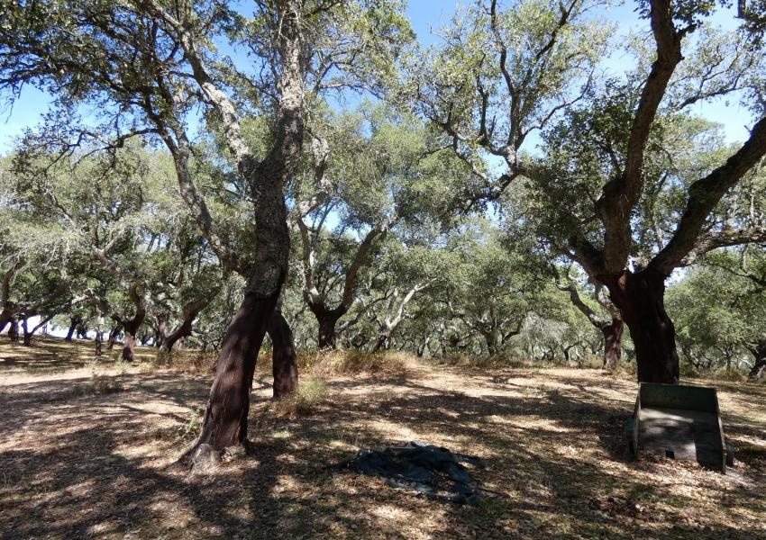 Propriété bâtie de caractère, avec forêt de Chêne-Liège au Nord-Est de Lisbonne