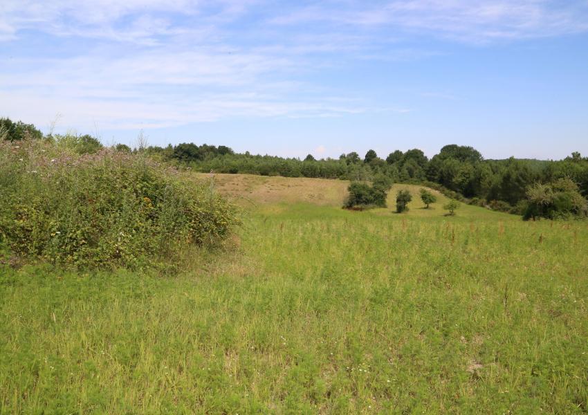 Domaine de chasse en Charente