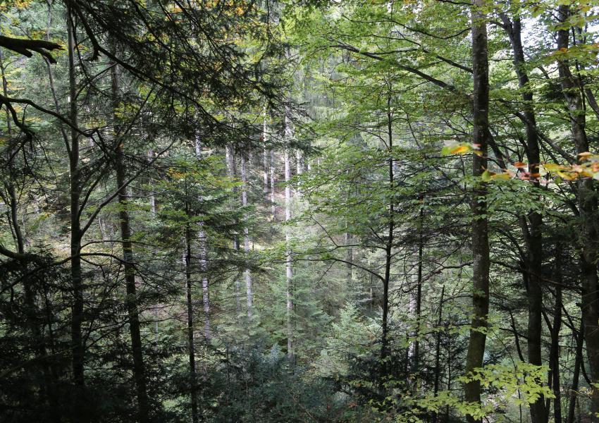 Forêt de production et propriété de loisir, proche de Genève (Suisse)