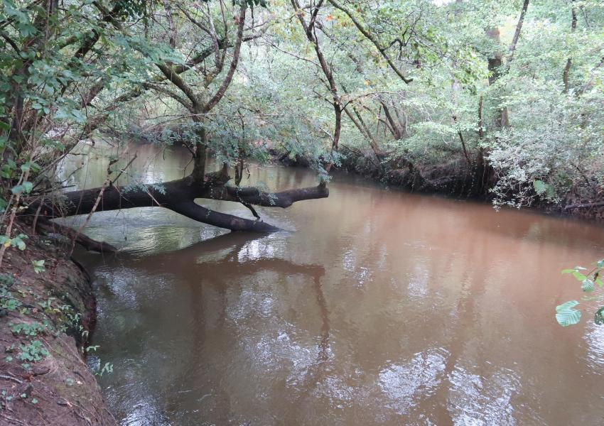 Forêt de 40 ha en Gironde