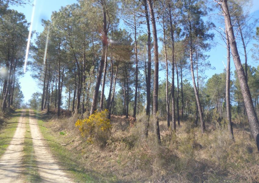 Forêt de Production en Dordogne