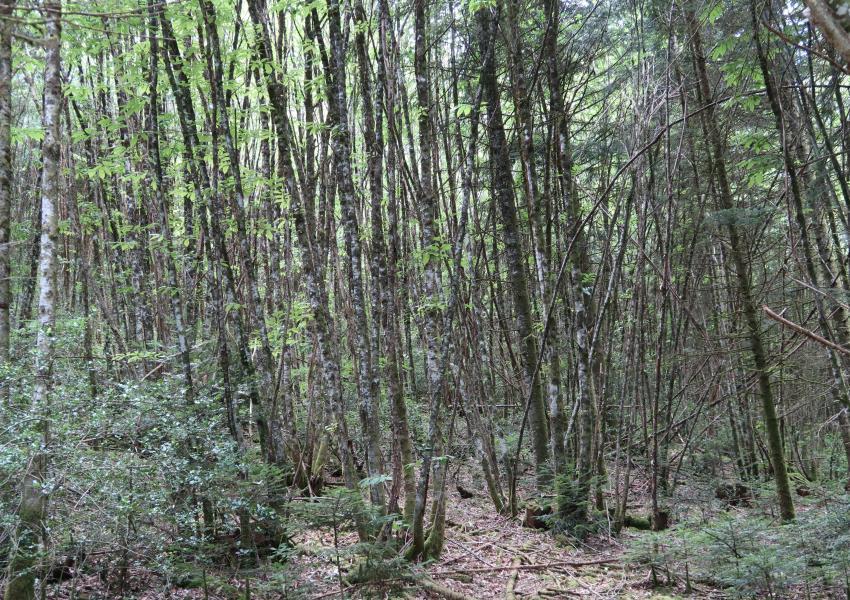 Forêt de production dans le Limousin