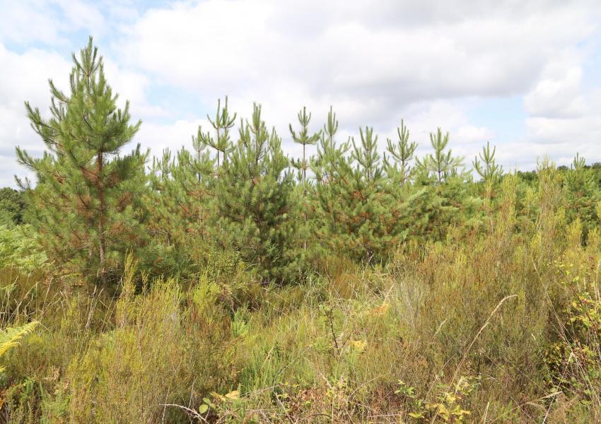 Bosque de producción en Dordoña