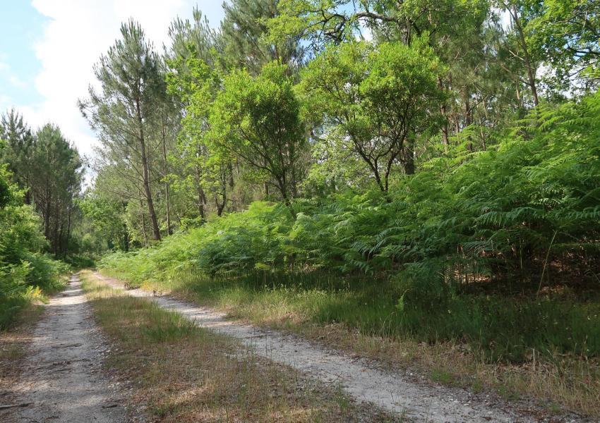 Forêt de production et de loisirs en Gironde