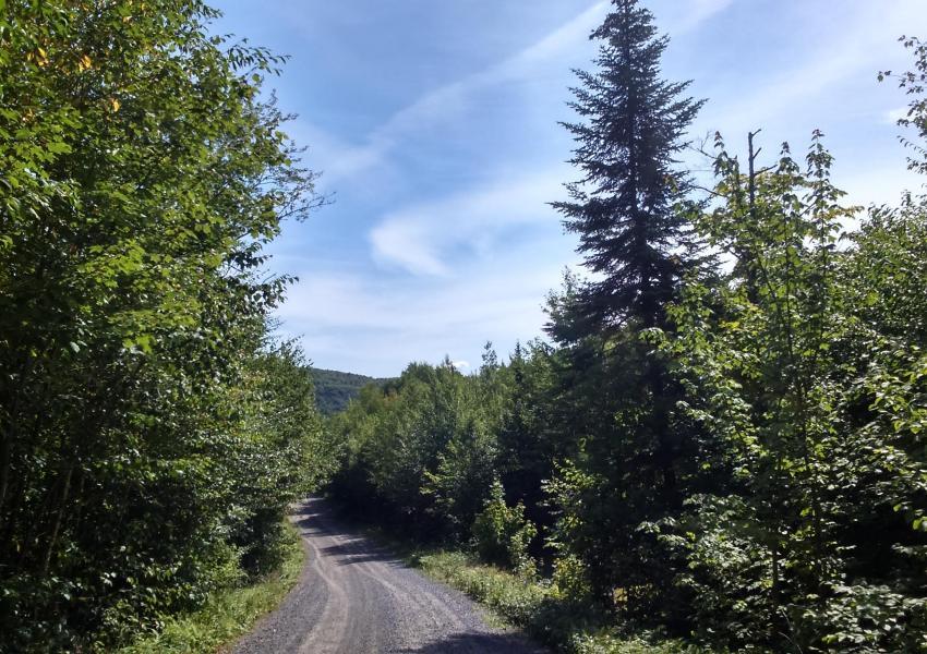 Massif forestier près de la ville de Québec