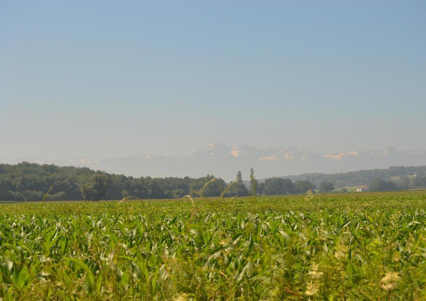 Propriété forestière dans les Hautes-Pyrénées
