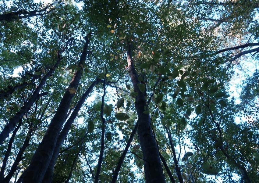 Forêt de production dans le Gers
