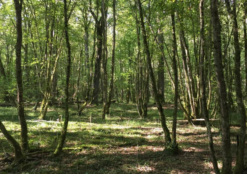 Forêt de Production et de loisir de 96 ha en Bourgogne-Franche-Comté