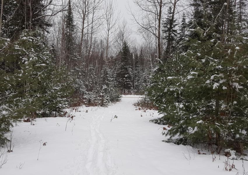 Foret au Quebec en bordure de la  rivière du Lièvre