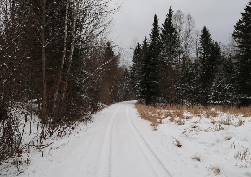 Massif forestier divisible dans la municipalité régionale de Papineau ; Forêt du Chemin Gagnon - Ouest Québec